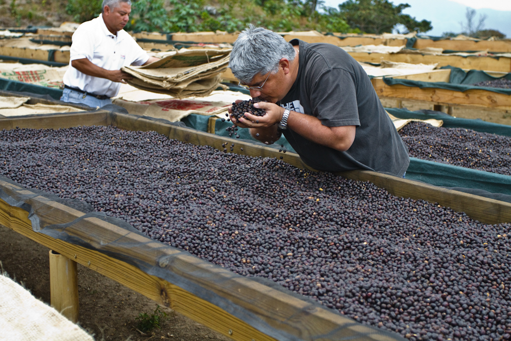 Finca Los Pirineos El Salvador Direct Trade Fratello