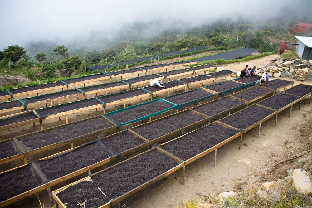 African drying beds Finca Los Pirineos El Salvador Direct Trade Fratello